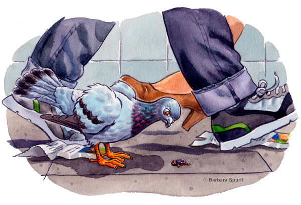 Harry the Street Pigeon