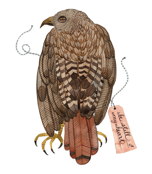 Red Tail Hawk,  watercolor on paper, Golly Bard | Holly Ward Bimba   © all rights reserved