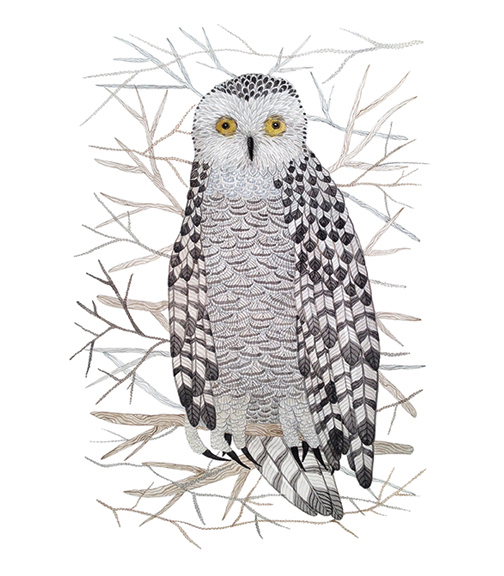 Snowy Owl,  watercolor on paper, Golly Bard | Holly Ward Bimba   © all rights reserved