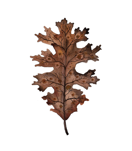 Black Oak Leaf,  watercolor on paper, Golly Bard | Holly Ward Bimba   © all rights reserved