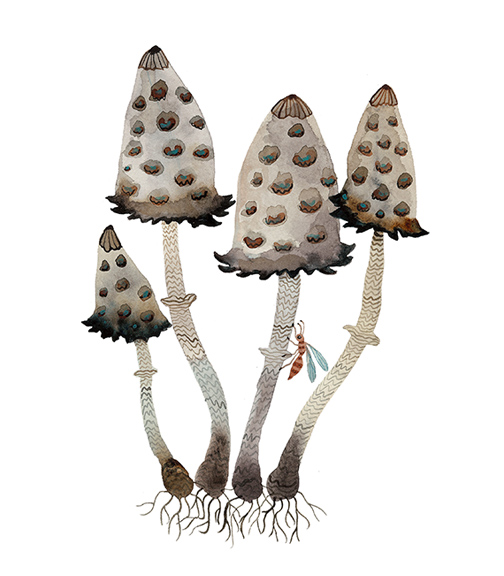 Shaggy Ink Caps,  watercolor on paper, Golly Bard | Holly Ward Bimba   © all rights reserved