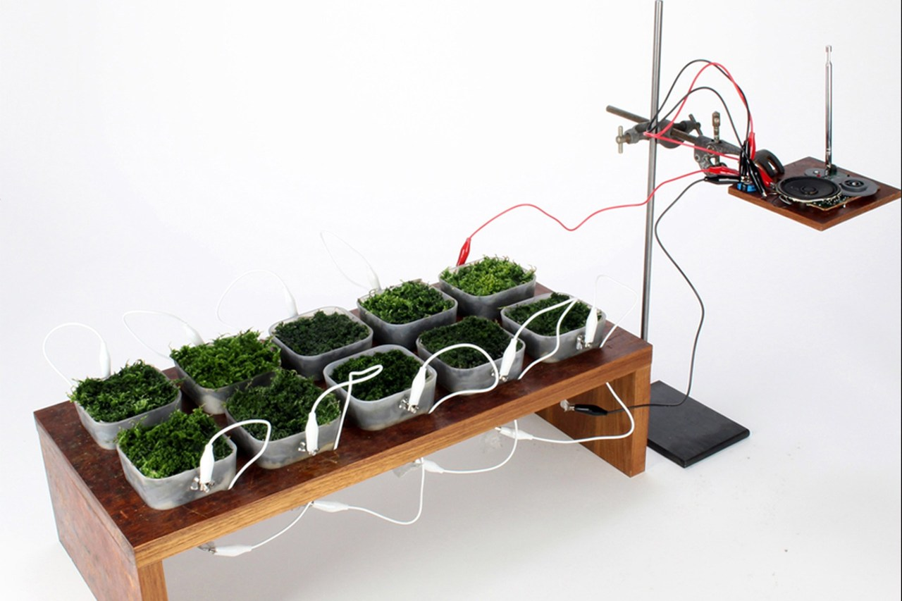 Power plant: this radio runs on moss by Joseph Flaherty, wired.co.uk Design­er Fabi­enne Felder wants to reuphol­ster jumbo jets with moss. In her vision, pas­sen­gers will sit on ver­dant tufts while the bryophytes puri­fy the air and use elec­trons cap­tured dur­ing pho­to­syn­the­sis to power the Direct TV pan­e… http://flip.it/Odd8t