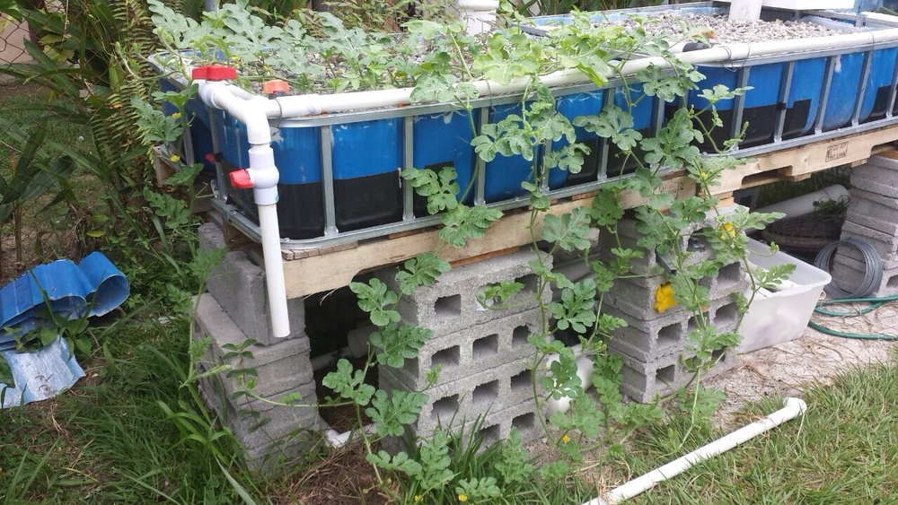 Aquaponic System Built by Billy Chrzan, of Crimson Outreach in Honduras.