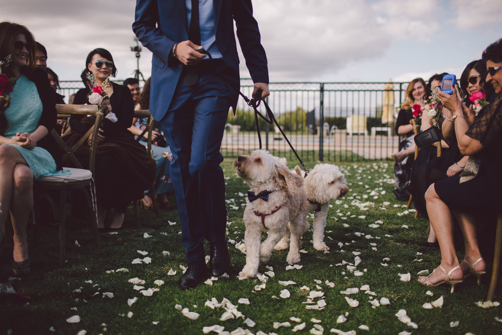 malibu-wedding-dogs-ceremony-ring bearer-aisle-boho