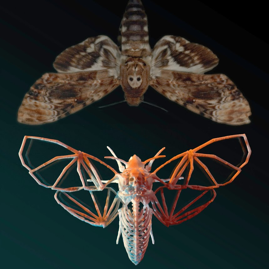 moth_mirror.jpg