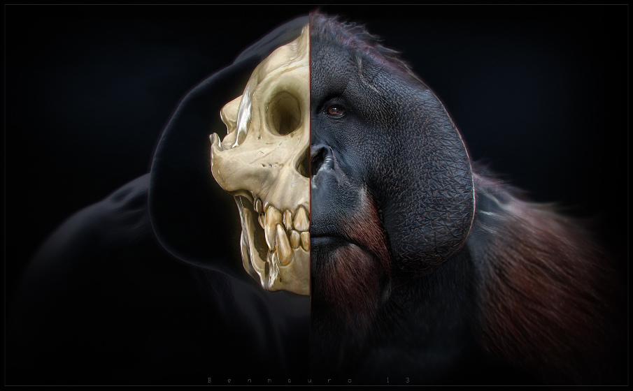 TANG_render_skull4_BM_905.jpg