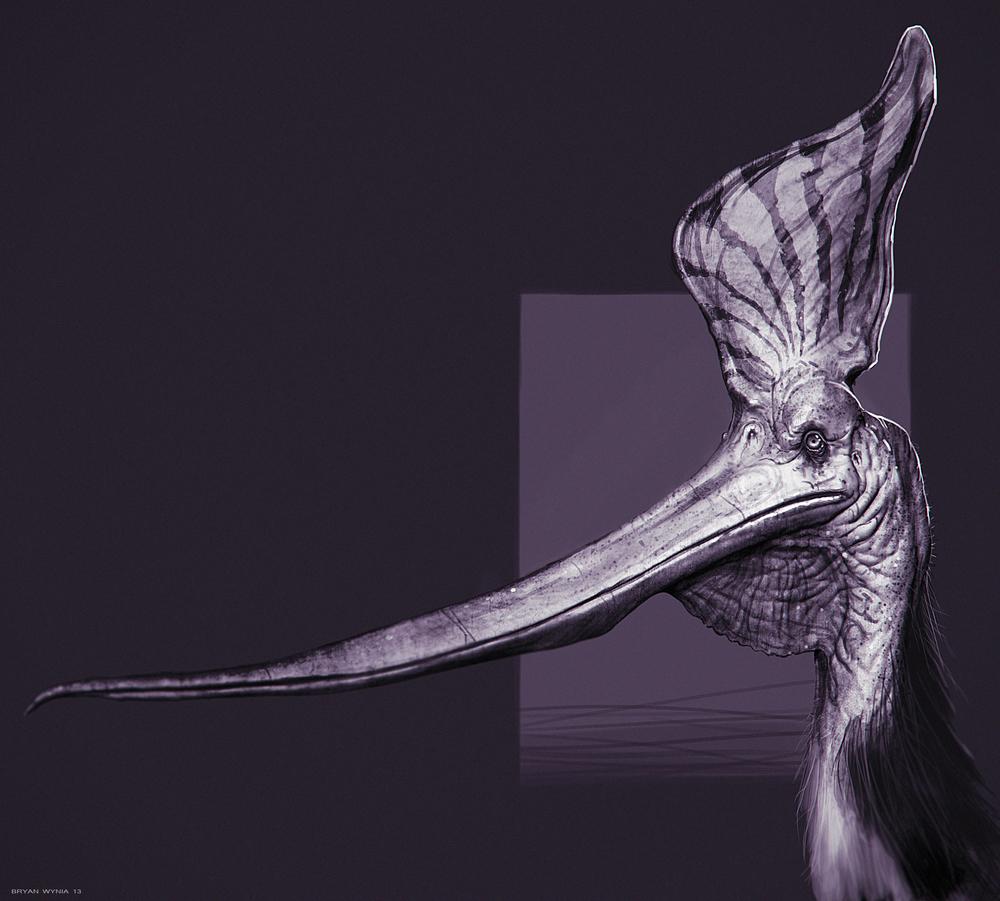 Pteranodon Sternbergi Study.jpg