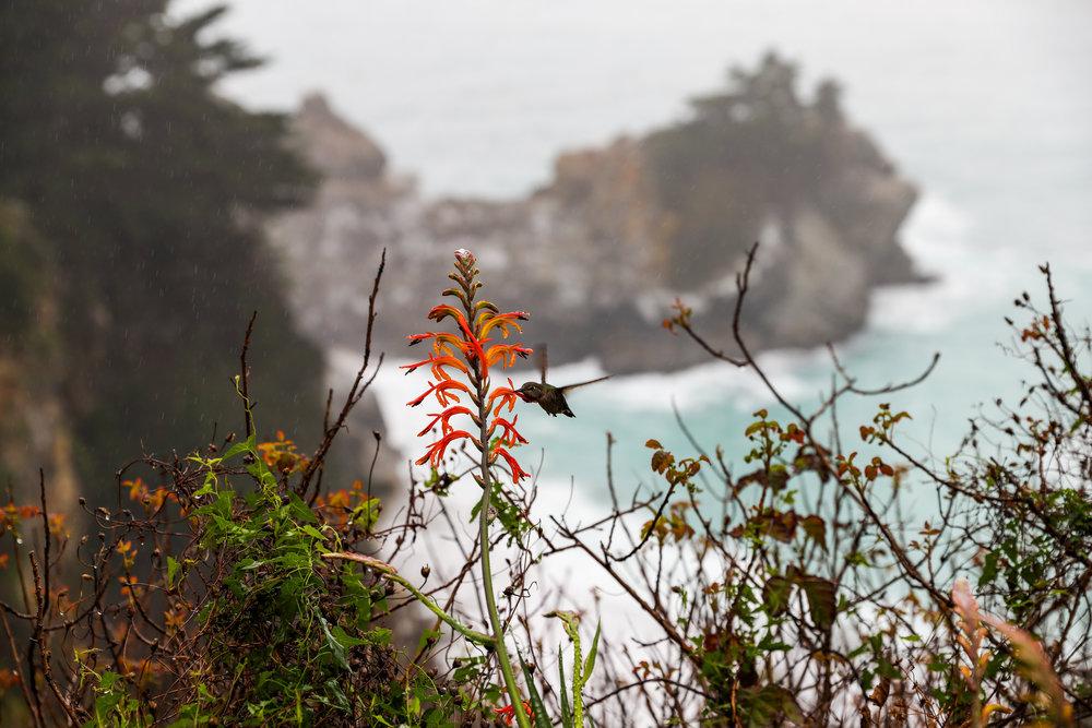 california-6634.jpg