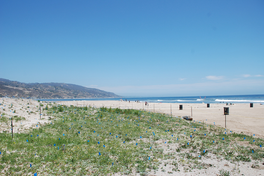 12-rcd-stevens-bunch-design-malibu-lagoon-surfrider-beach.JPG