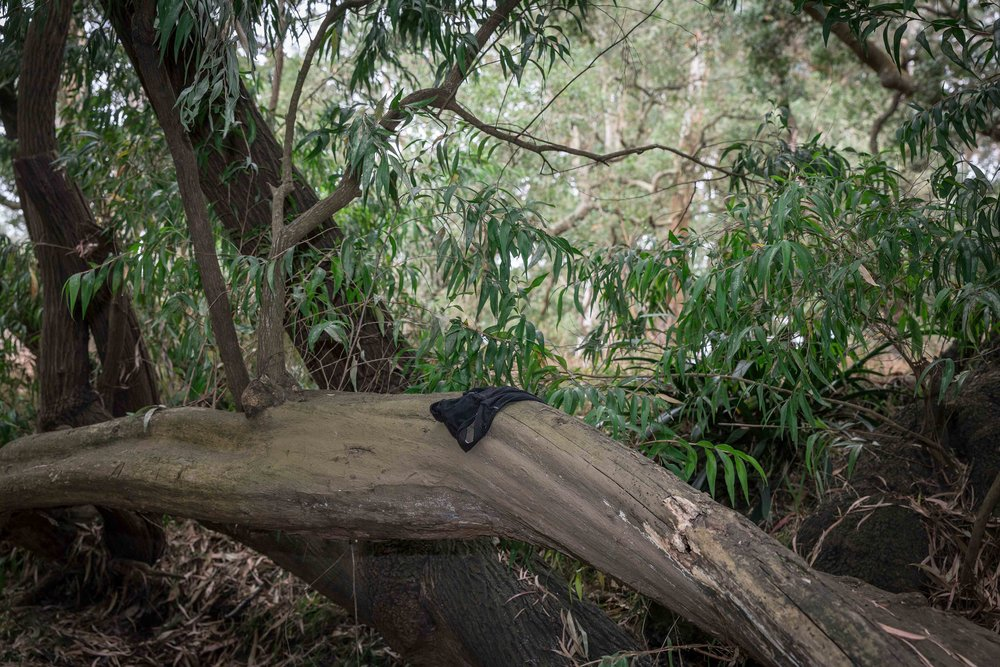 Tree trunk. Underwear. (2017)