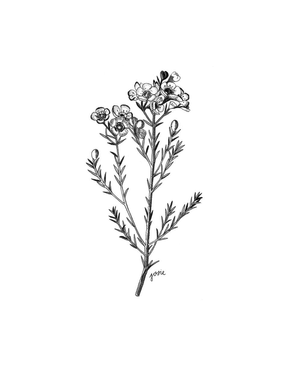 Floralsmain.jpg