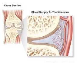 The Peripheral Third of the Medial Meniscus has a Blood Supply Allowing successful repair.