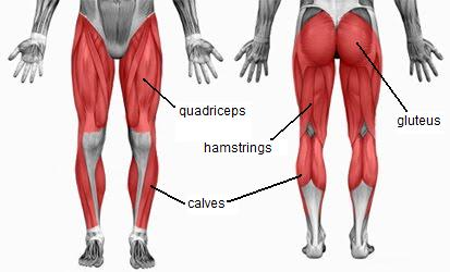 Dr christopher vertullo knee surgeon gold coast australiadr hamstring calf stretching is very important these muscle can be stretched in a variety of ways but these two diagrams offer a simple way to start ccuart Gallery