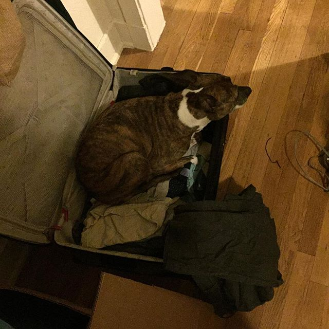 As moving day is in full effect, Ginger assures she's not left behind by packing herself into a suitcase. I appreciate the proactive mentality.
