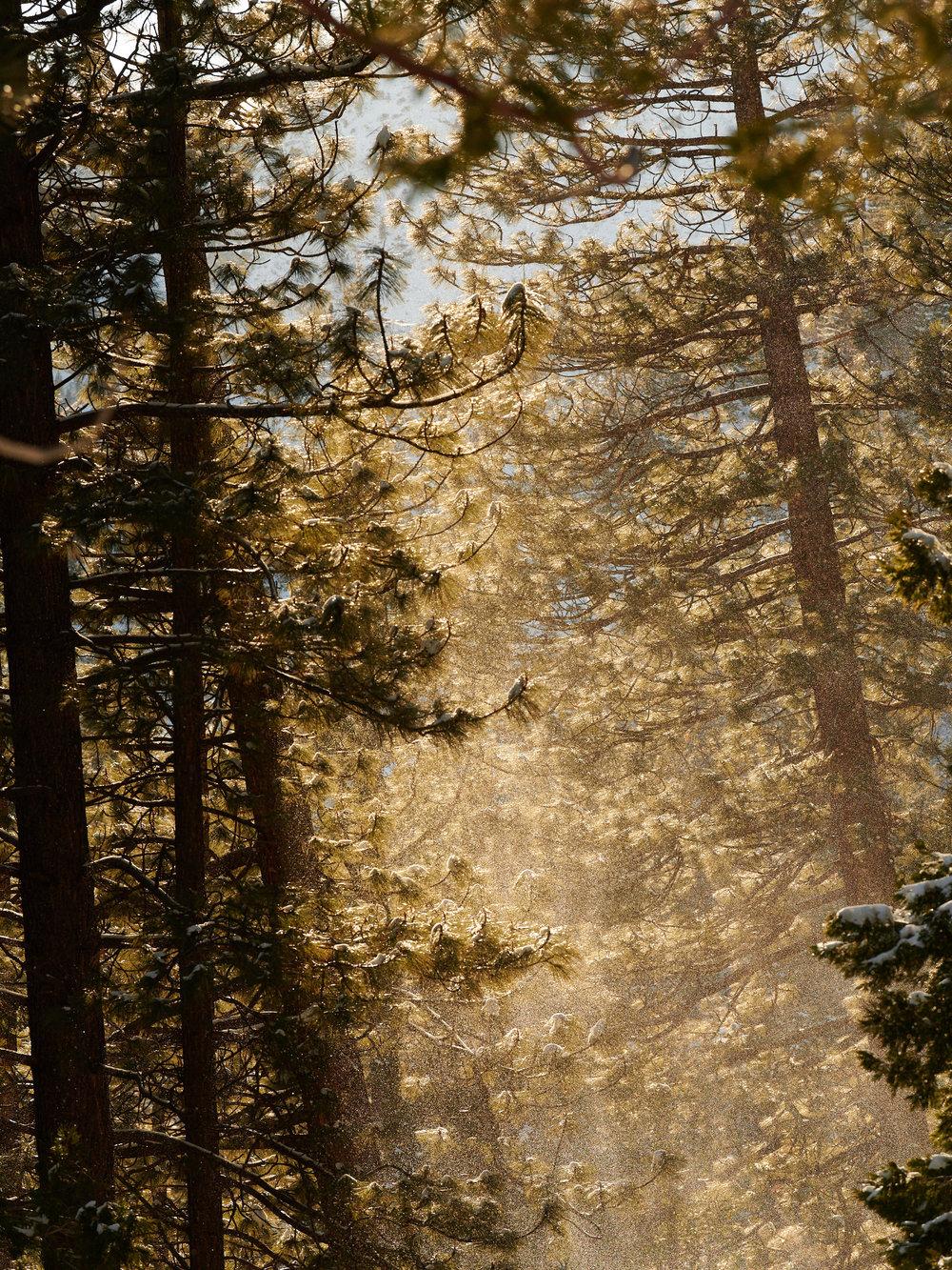 Tahoe-1801-Wojack-2322.jpg