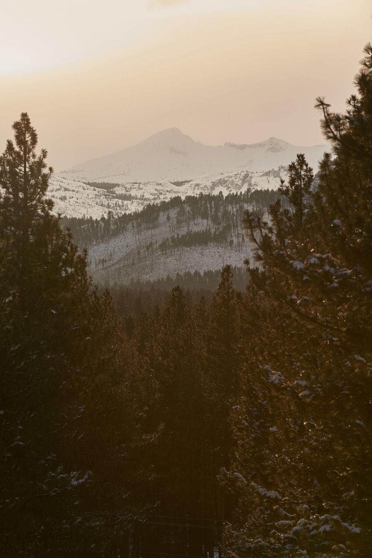 Tahoe-1801-Wojack-4013.jpg