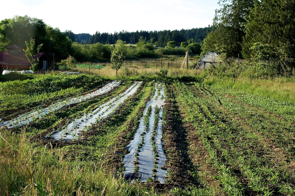 organic flower and produce farm in Victoria BC, home of Clare Day Flowers