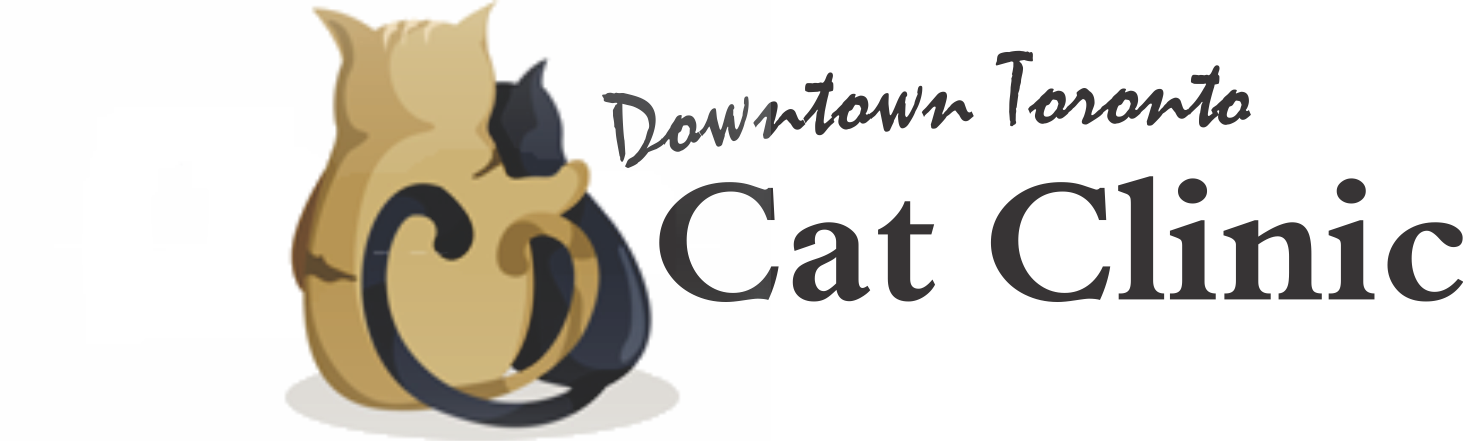 Downtown Toronto Cat Clinic