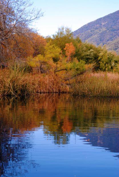ponds and wildlands.jpg