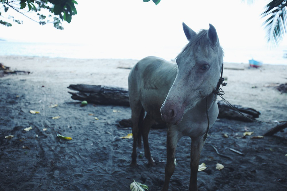 Horse in Manzanillo Costa Rica