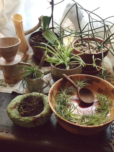 My plant collection. One died after this photo was taken. The wood inlay bowl was made by my grandpa-in-law. The small marbled blue/green mug was made by Chicago artist, Leah Ball. The pour over set behind it was made by Martina Thornhill. The spider plant is in a planter made by Chicago artist, Christi Ahee.
