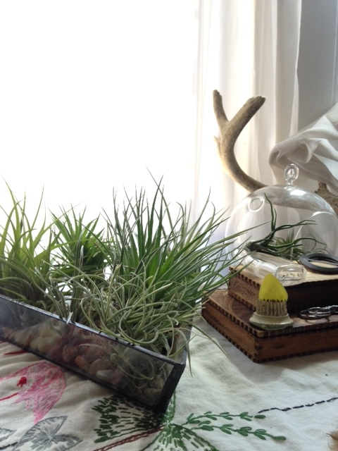 I love air plants. We don't really have space for plants, but I do love them. The holder was made by Twiggy Levy (Halona Glass).