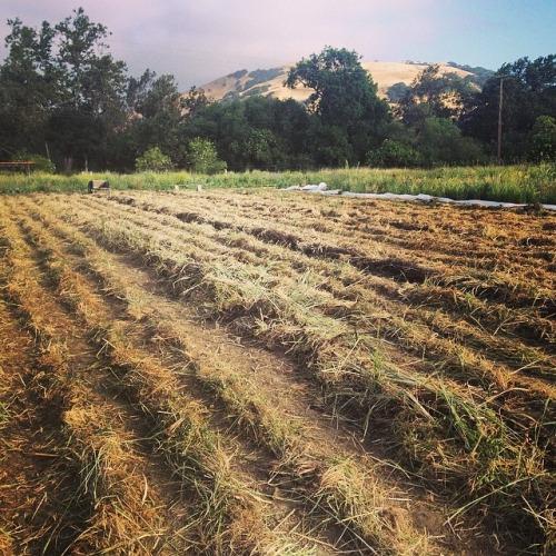 Namu Farm