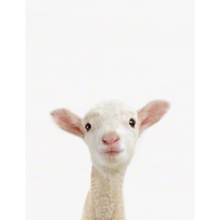 Lamb_Art for Nursery.jpg
