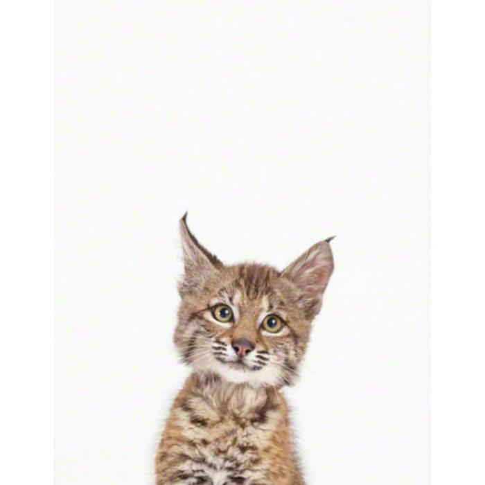 Baby-Bobcat_art-for-nursery.jpg