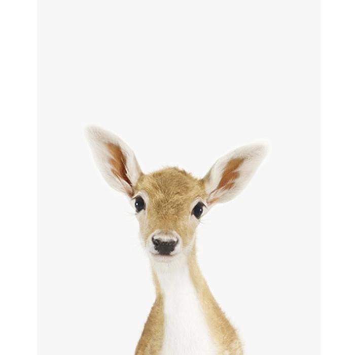 baby-deer-children-pictures-www.theanimalprintshop.com.jpg