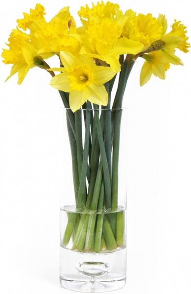 daffodils_in_vase_188493.jpg
