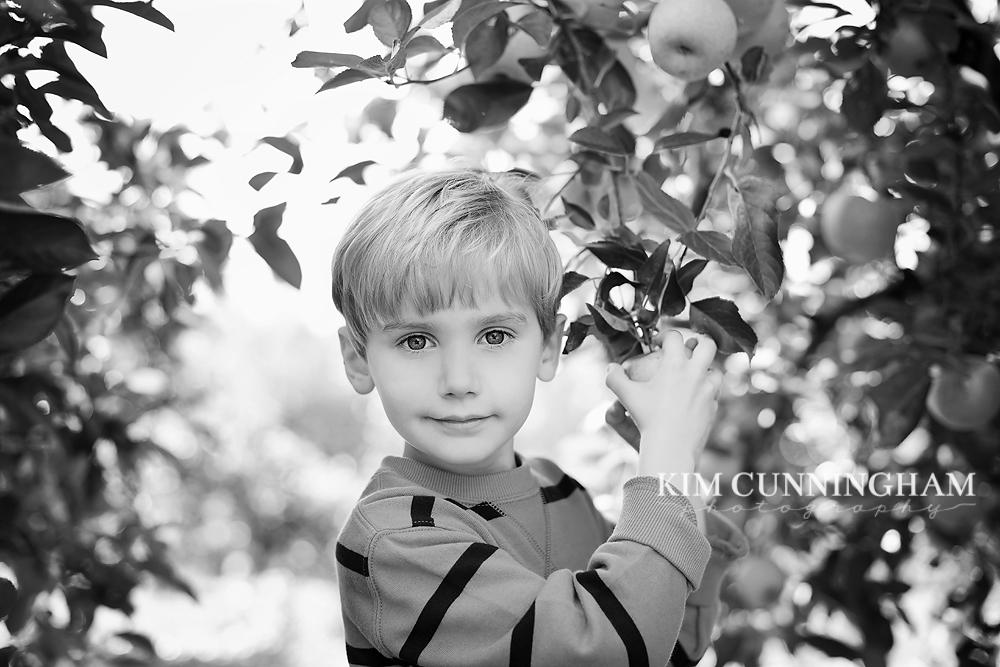 J apple orchard-kcp.jpg