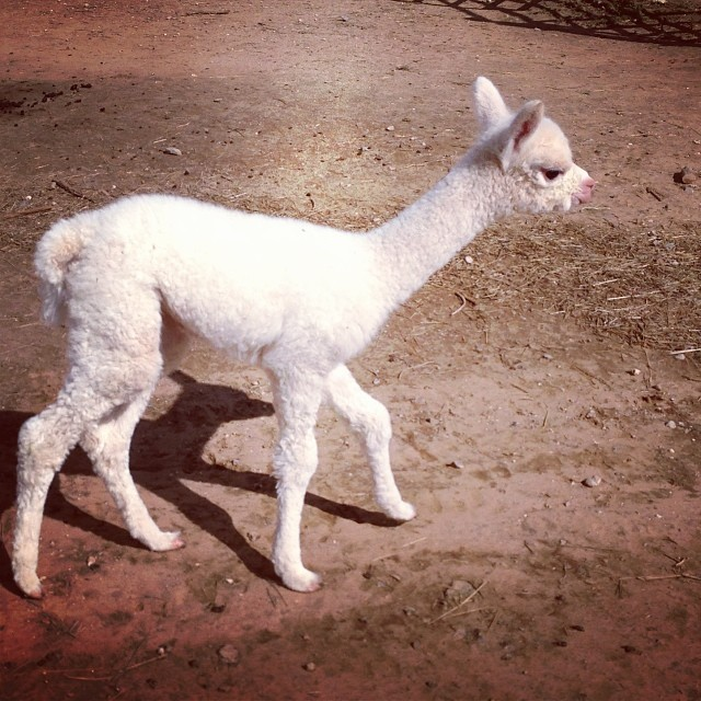Young Cria...