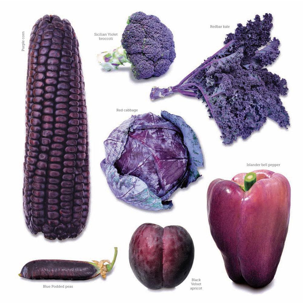 ed colors purple.jpg