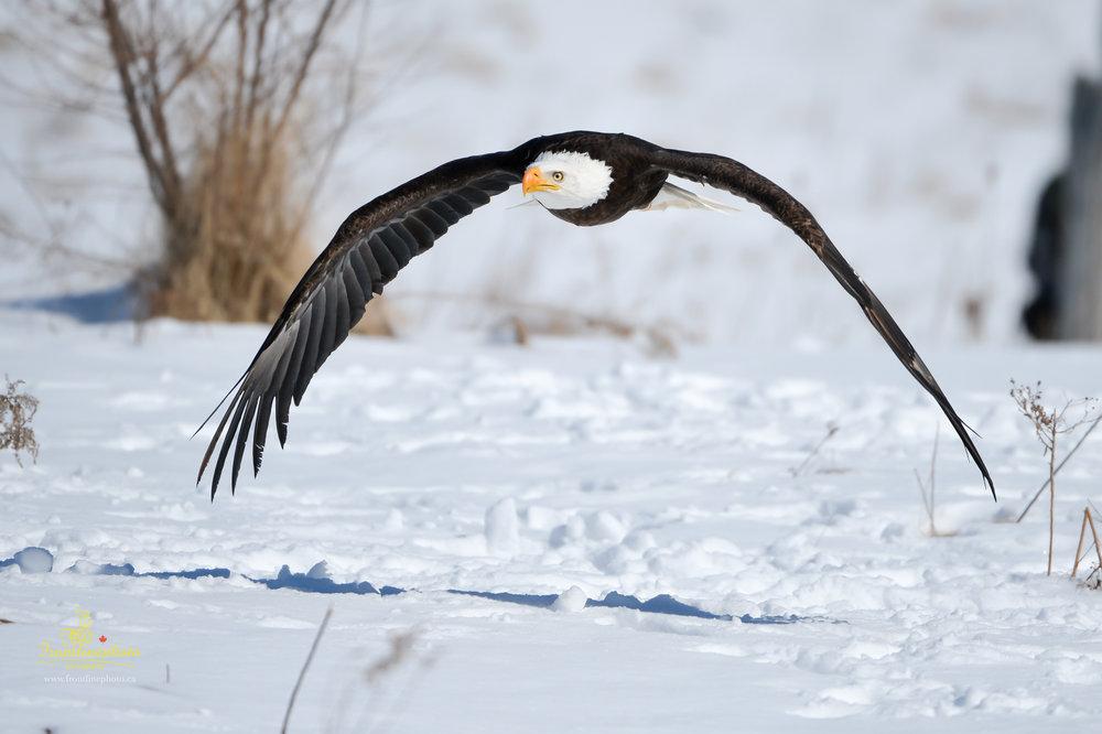 Canadian Raptors-1015.jpg