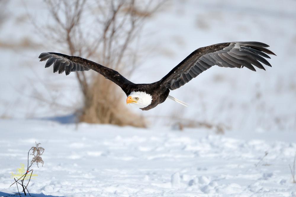 Canadian Raptors-1016.jpg