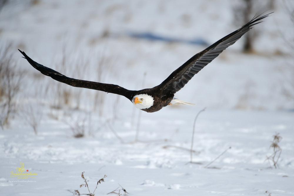 Canadian Raptors-1017.jpg
