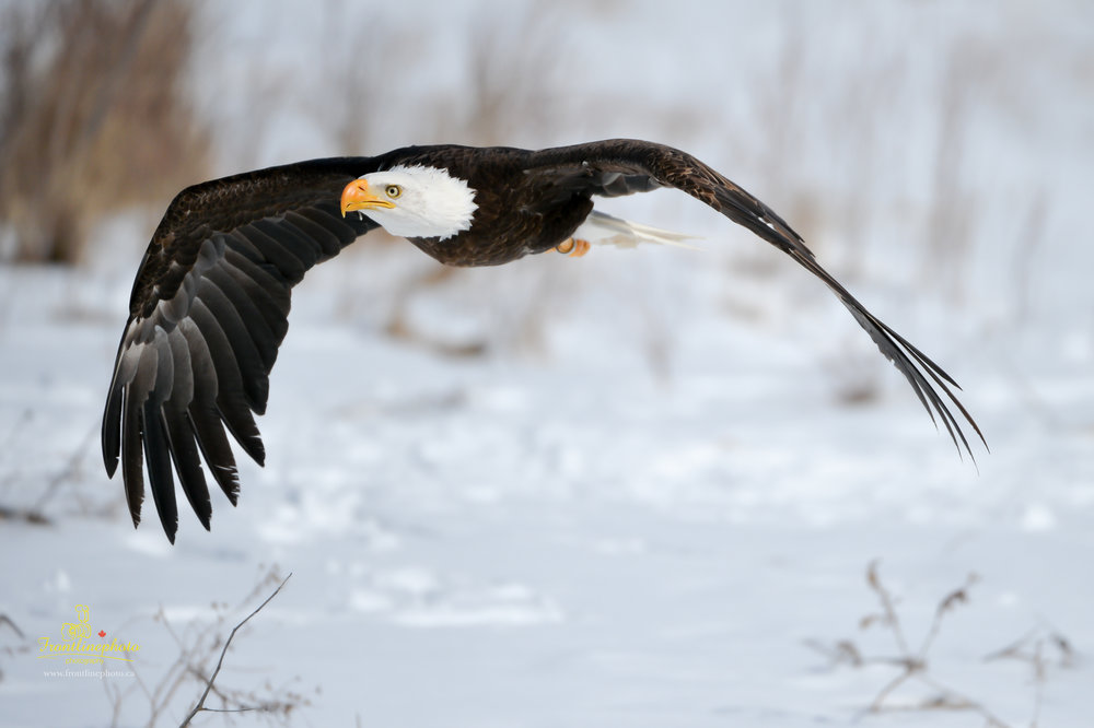 Canadian Raptors-1018.jpg