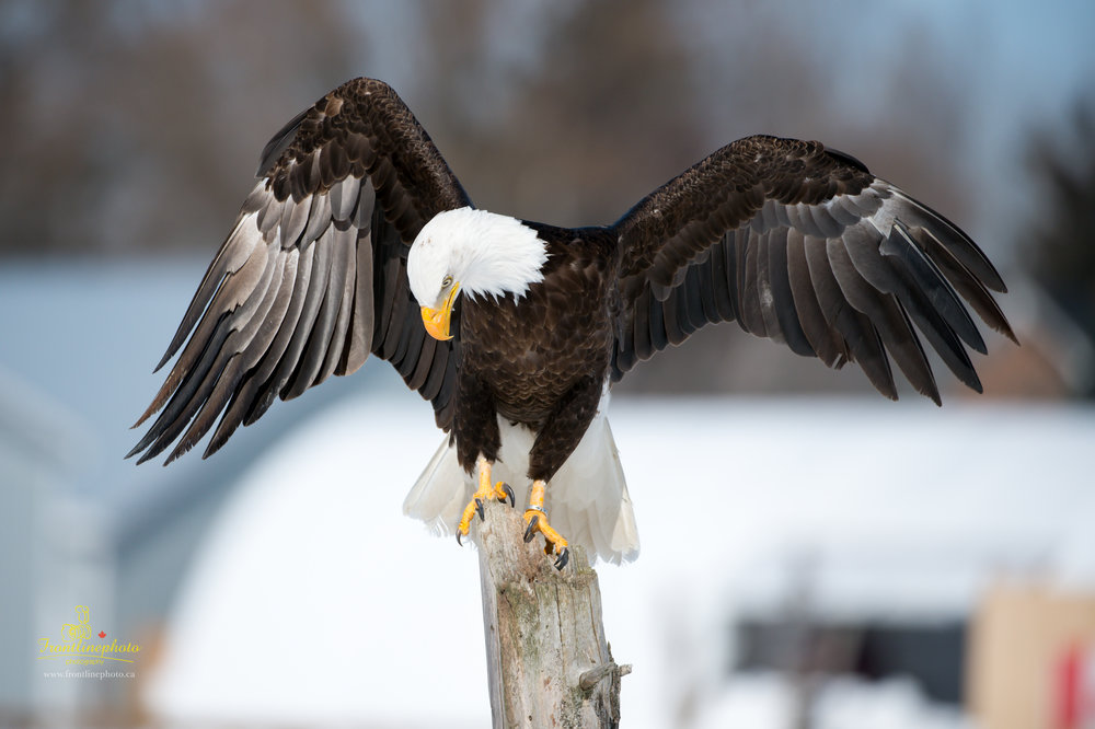 Canadian Raptors-1019.jpg