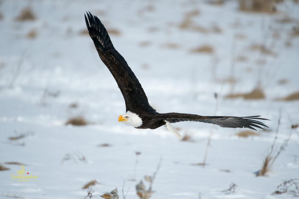 Canadian Raptors-1025.jpg