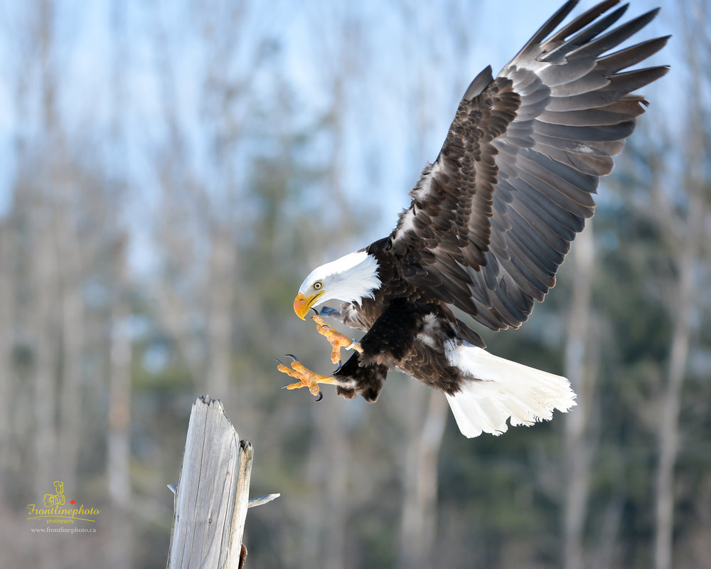 Canadian Raptors-1028.jpg