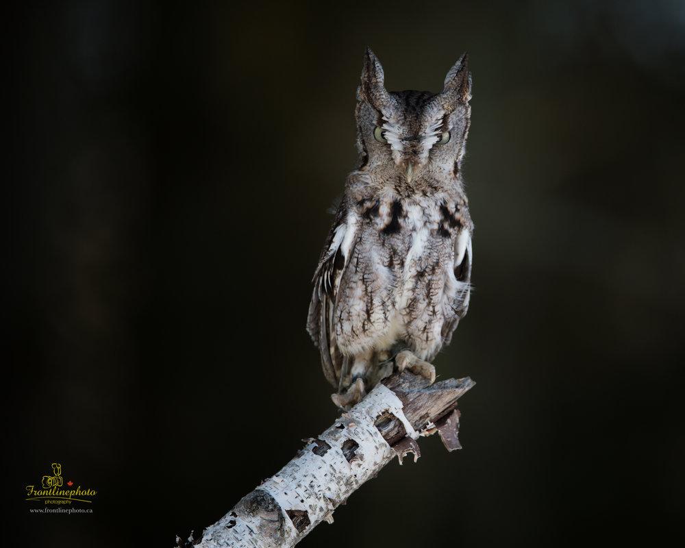Baby Owl-1002.jpg