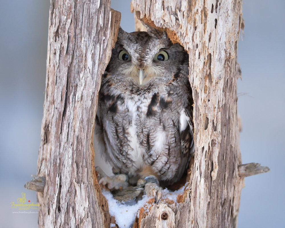 Baby Owl-1005.jpg