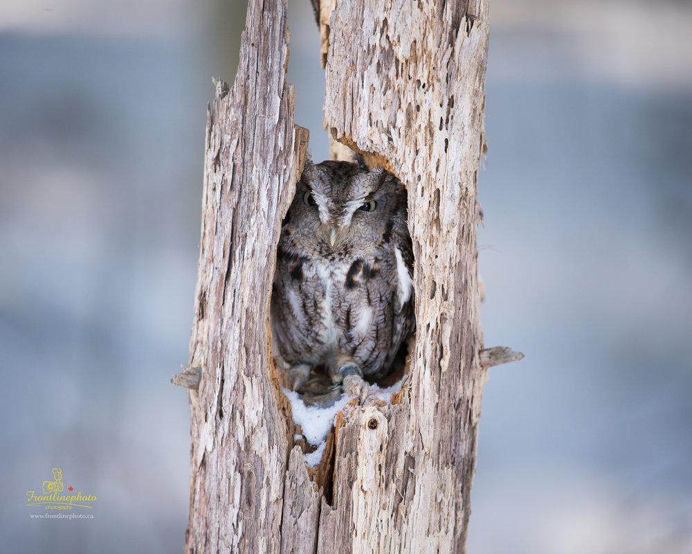 Baby Owl-1004.jpg
