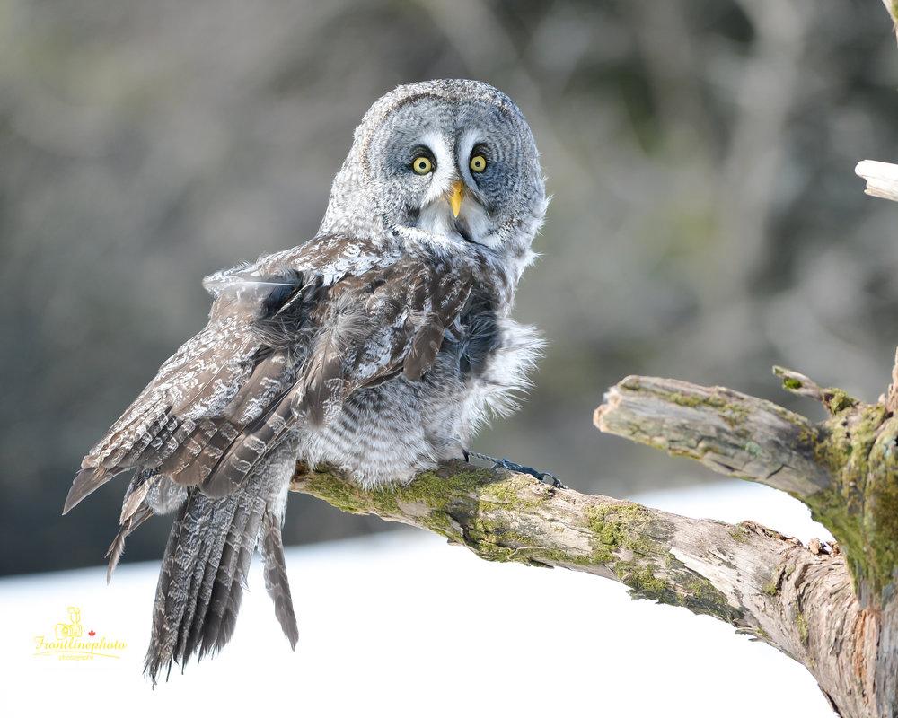 baby Owl-2000.jpg