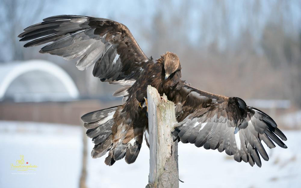 Hawk-1002.jpg