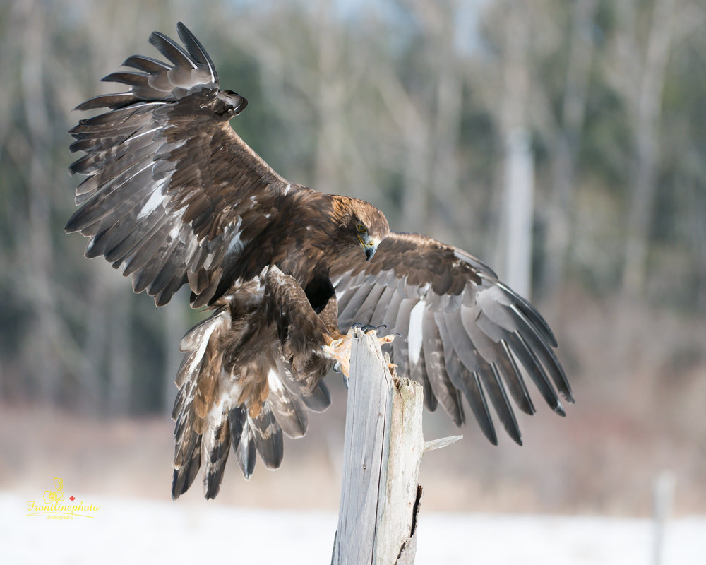 Hawk-1011.jpg