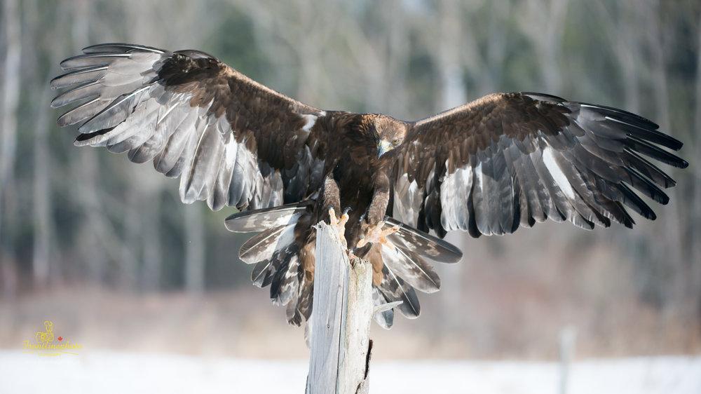 Hawk-1015.jpg