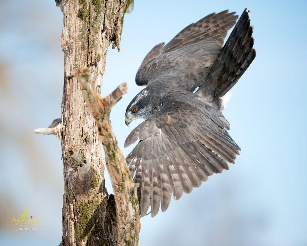 Striped Bird-1005.jpg