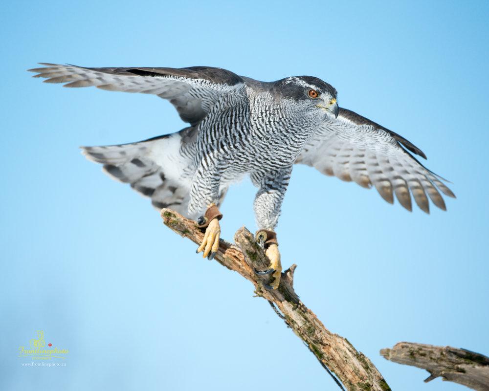 Striped Bird-1007.jpg